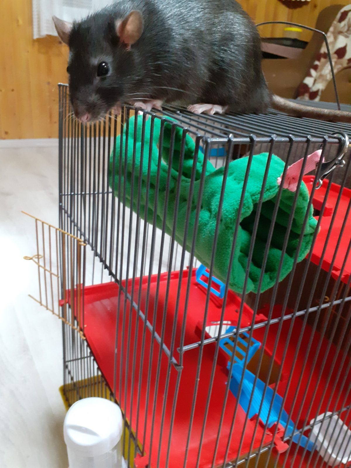 Шьем гамак для крысы своими руками